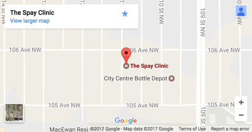 Spay Clinic - Contact Us Nap